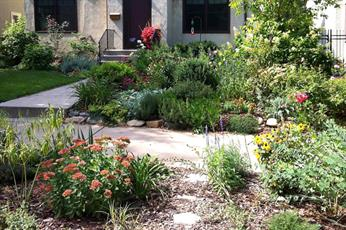 Raingardens reduce runoff pollution in storm water.