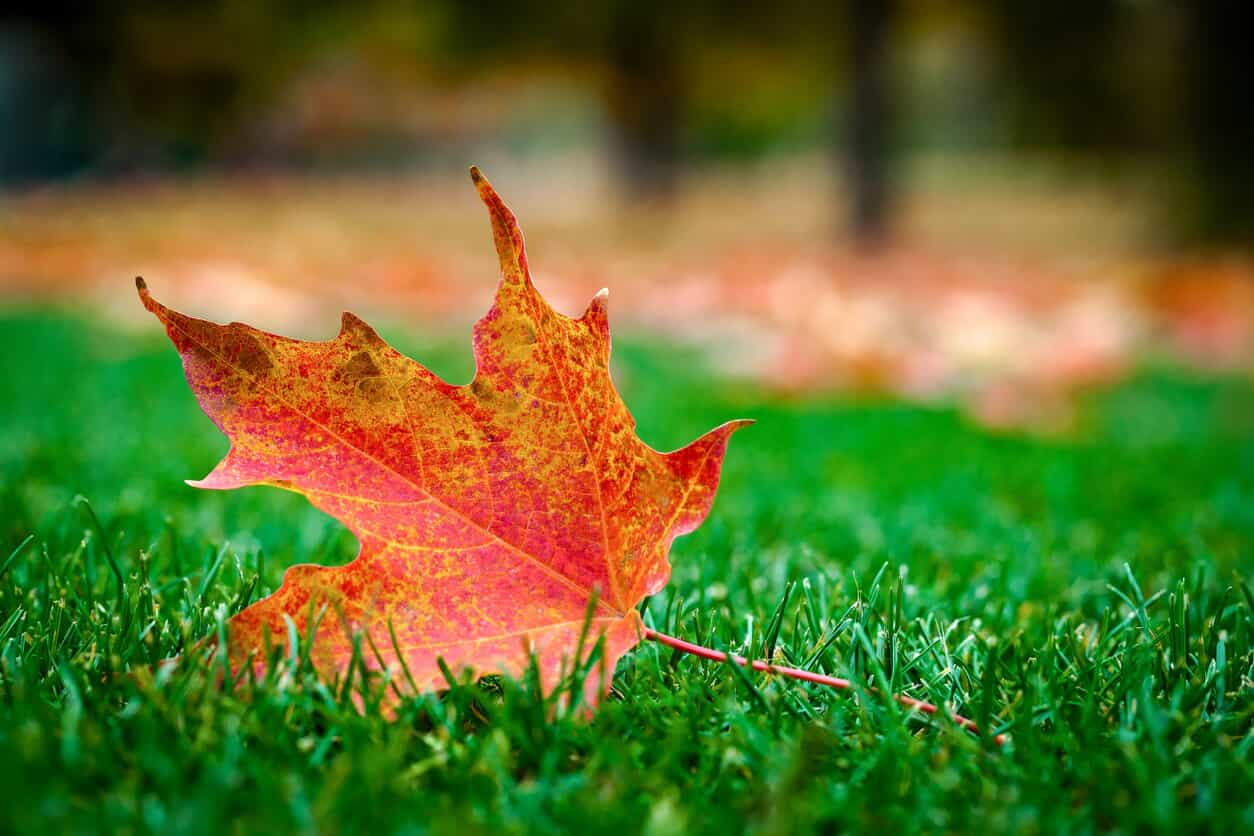 fall is the best time to seed and aerate your chattanooga lawn